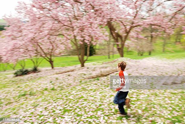 boy in magnolia grove - grove stock photos and pictures