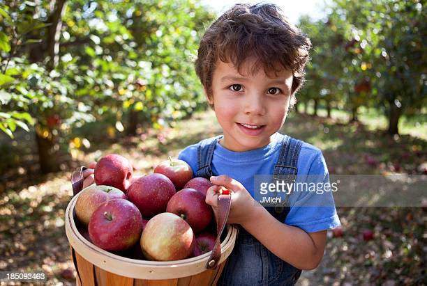 Boy in Orchard with basket of freshly picked apples.