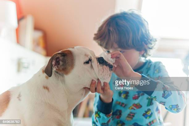 boy in pajama at home cleaning bulldog wrinkles