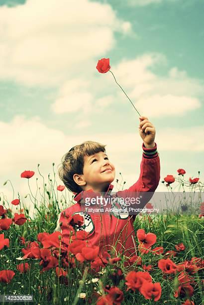 Boy in poppy field