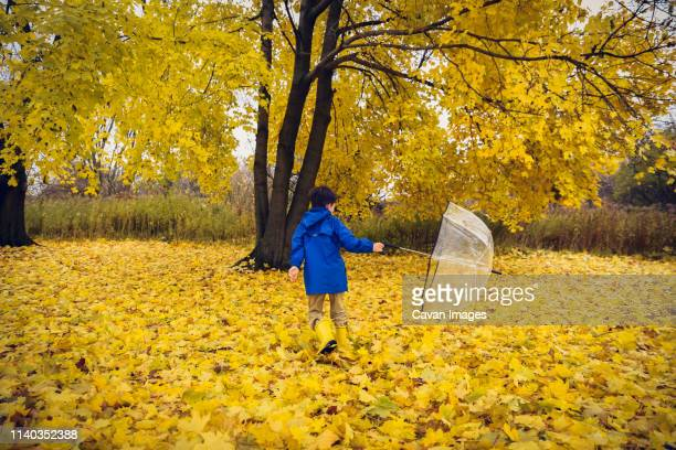 boy in rain gear spinning with umbrella in field of autumn leaves - yellow shoe stock pictures, royalty-free photos & images
