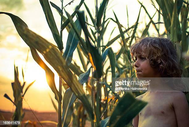 A boy in the cornfield at the sunset