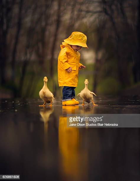 boy in the rain with ducks - duck bird stock pictures, royalty-free photos & images