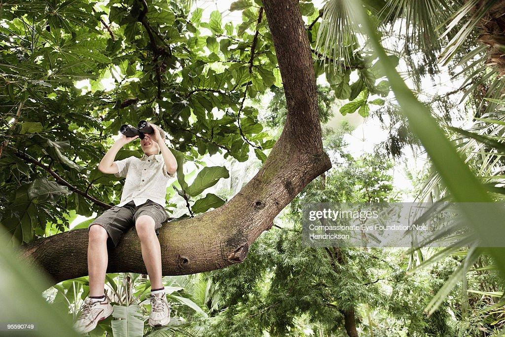 boy in tree using a pair of binoculars : Stock Photo