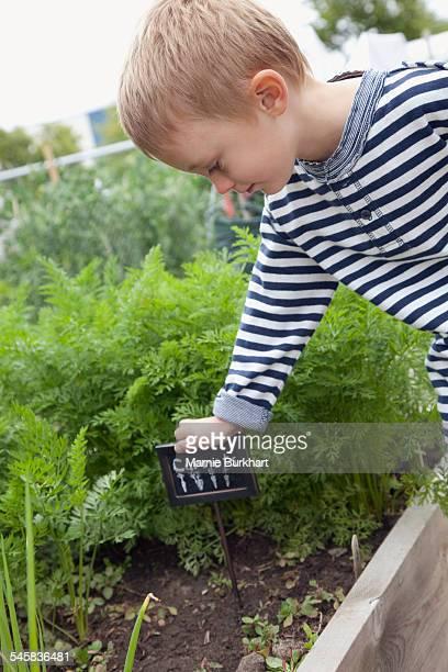 Boy in vegetable garden