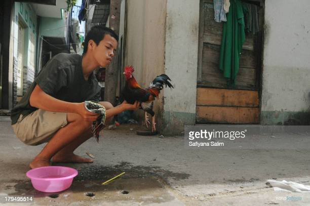 CONTENT] A boy is cleaning the cock after a cock fight happening in Ho Chi Minh City Vietnam