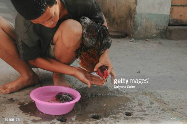 CONTENT] A boy is cleaning the cock after a cock fight in Ho Chi Minch City Vietnam