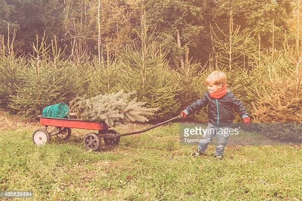 Boy is pulling a cart with his new christmas tree