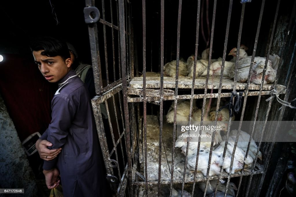 A boy is seen with his chicken at Raja market place where Pakistani people prefer shopping due to it's reasonable prices in Rawalpindi Pakistan on