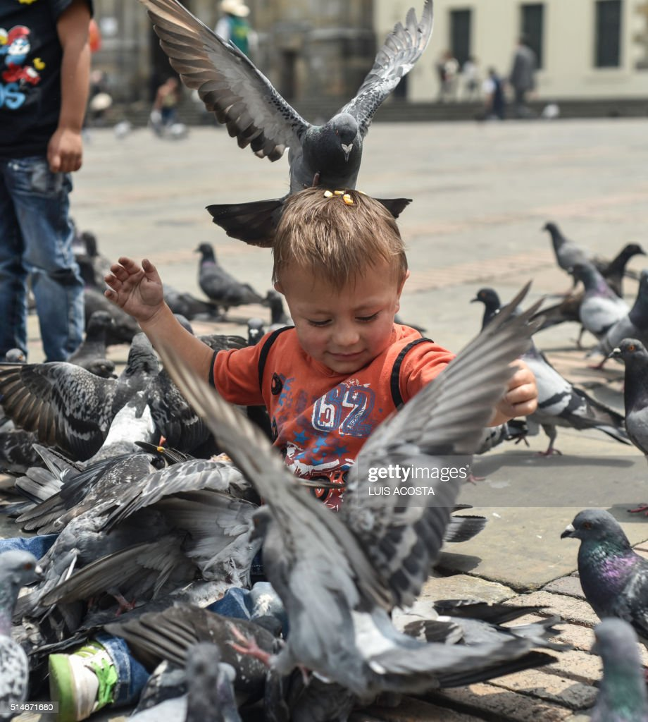 A boy is surrounded by pigeons at Bolivar square in Bogota, on March 10, 2016.
