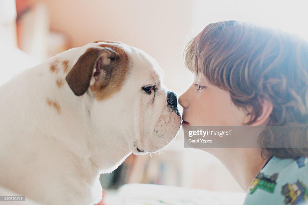 Boy kissing bulldog : Stock Photo
