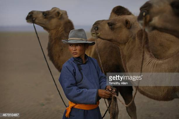 boy leads camel train through mongolian desert - omnogov stock pictures, royalty-free photos & images
