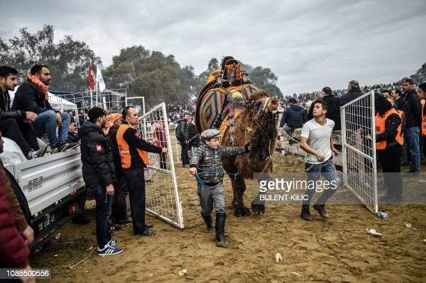 A boy leaves the arena with a camel after winning a fight during the Selcuk Camel wrestling festival in the town of Selcuk near the western Turkish...