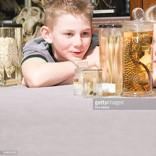 Boy looking at animals in jars