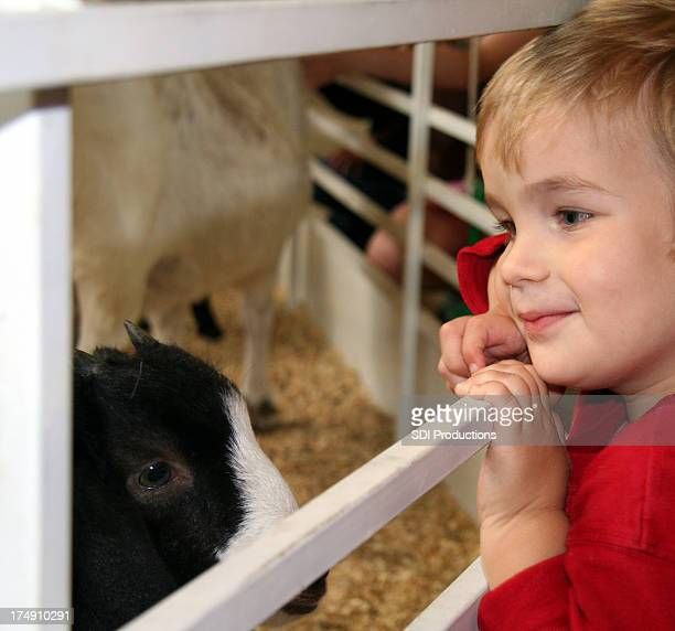 Boy Looking At Animals Through Fence In The Petting Zoo