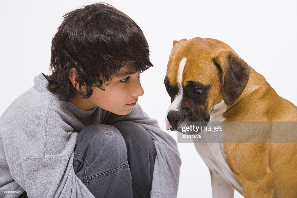 Boy looking at boxer dog : Stock Photo