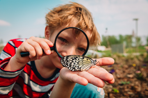 boy looking at butterfy, kids learning nature 1147333088