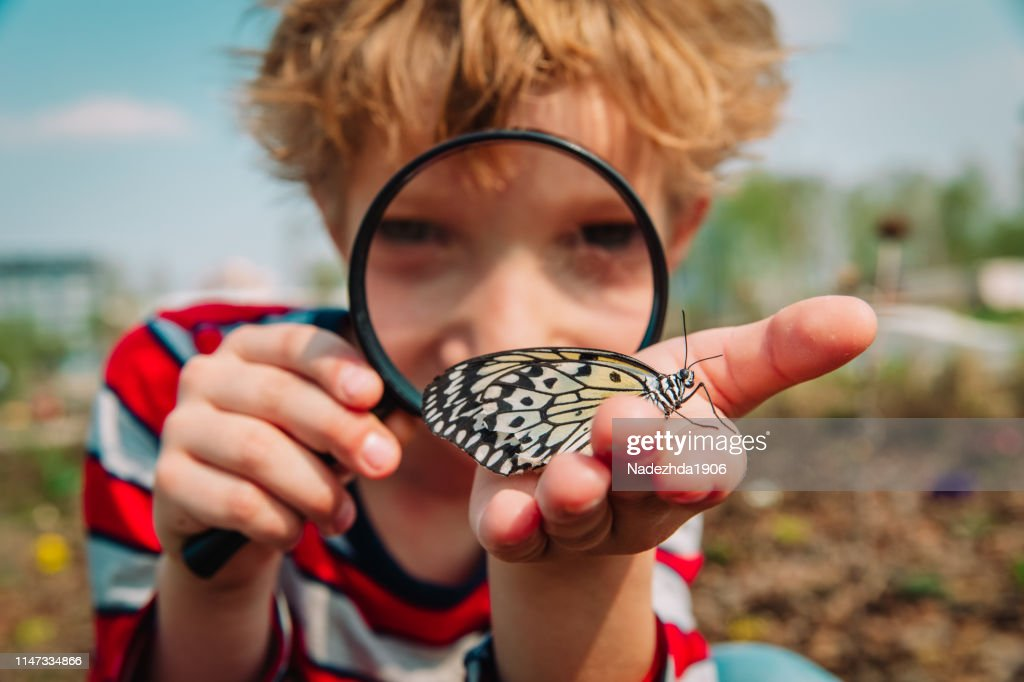boy looking at butterfy, kids learning nature : Stock Photo