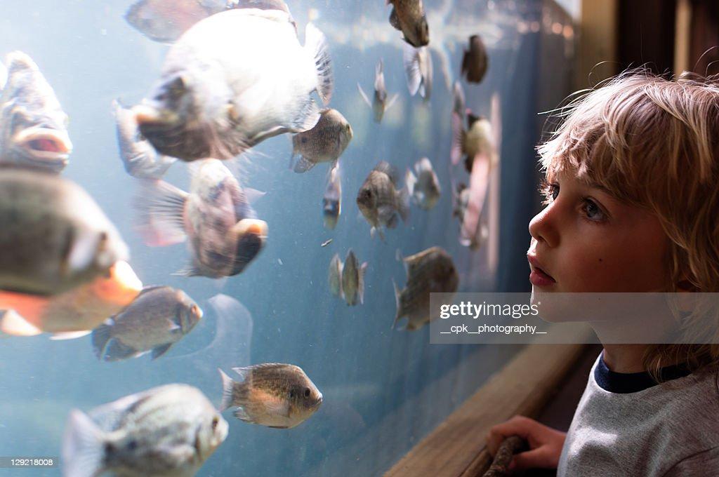 Boy looking at fish : Stock Photo