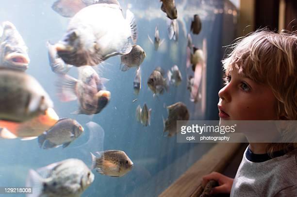 Boy looking at fish