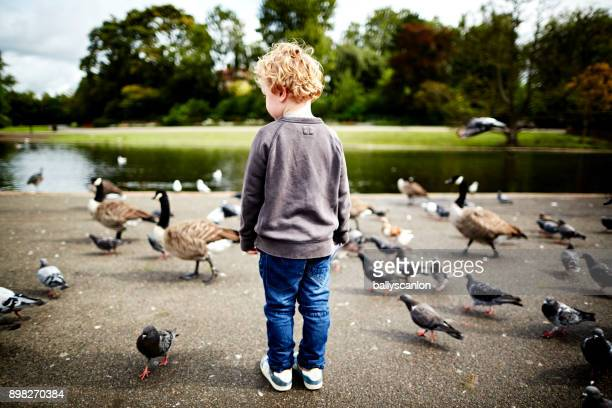 boy looking at pigeons park