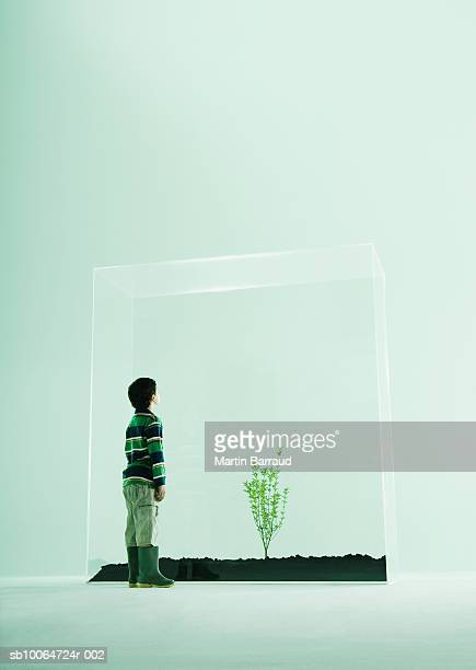 Boy (6-7) looking at plant in glass cabinet