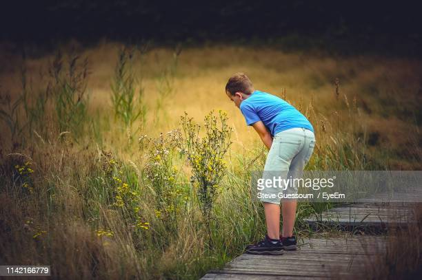 boy looking at plant while standing on boardwalk - steve guessoum stockfoto's en -beelden