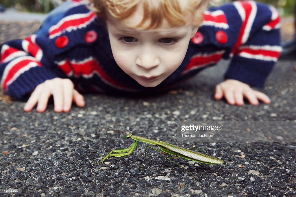 Boy looking at praying mantis : Stock Photo