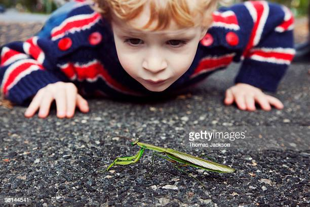boy looking at praying mantis - curiosity stock pictures, royalty-free photos & images