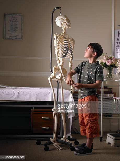 Boy (9-11) looking at skeleton in doctor's surgery