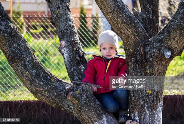 boy looking away while sitting on tree at park - igor golovniov stock pictures, royalty-free photos & images