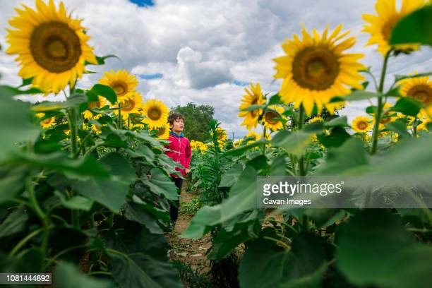 Boy looking away while standing at sunflower farm against cloudy sky