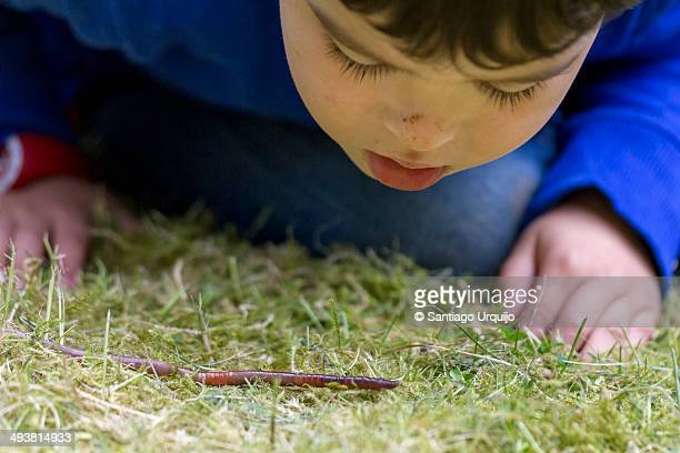 Boy looking closely at an earthworm on the ground