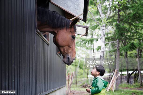 Boy looking into a horse which putting its head out of the window of the horse stable