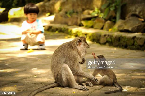 Boy Looking Monkey With Baby Sitting On Footpath