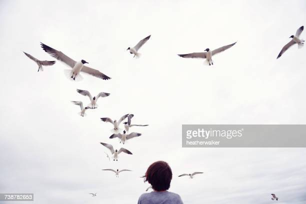 Boy looking up at seagulls flying over him, South Padre Island, Texas, America, USA