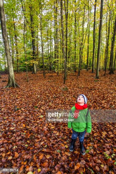 Boy looking up to the canopy of a beech forest
