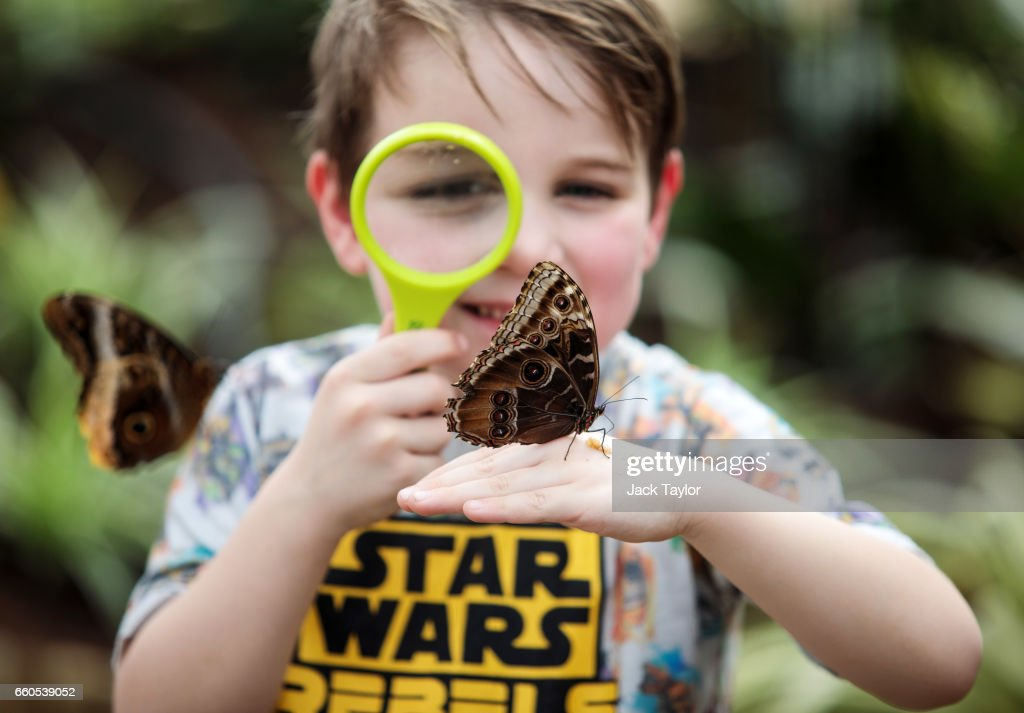 The Natural History Museum's Sensational Butterflies Exhibition Prepares To Open To The Public : News Photo