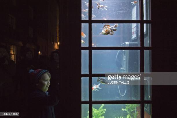 TOPSHOT A boy looks at fish in the Aquarium by artists Benedetto Bufalino and Benoit Deseille on show as part of the Lumiere light festival in London...
