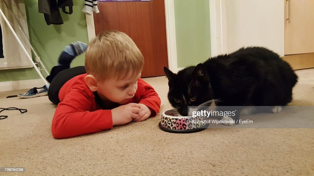 Boy Lying Down While Looking At Cat Eating Food At Home : Stock-Foto