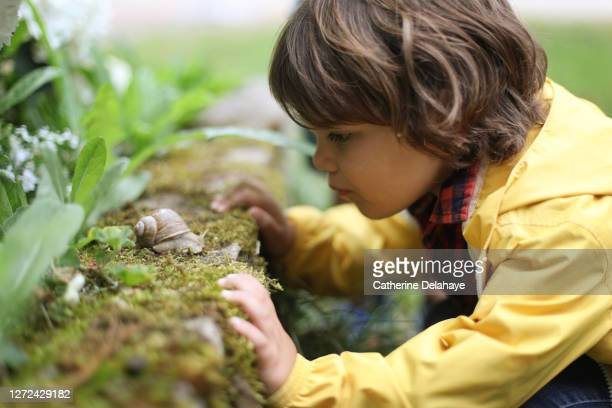 a boy observing a snail - non urban scene stock pictures, royalty-free photos & images