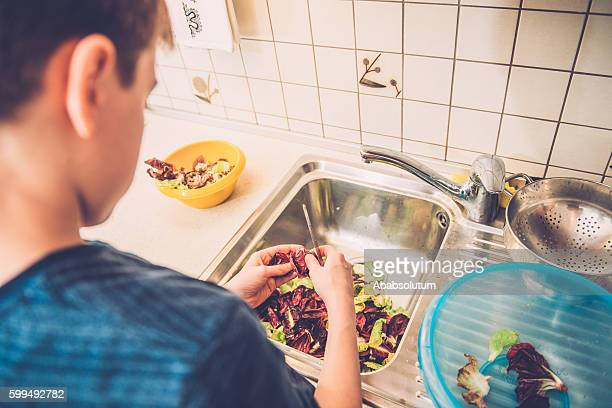 Boy of Twelve Cleaning Radicchio in Home Kitchen, Europe