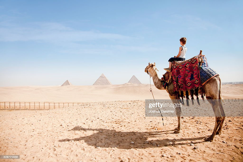 Boy on a camel : Stock Photo