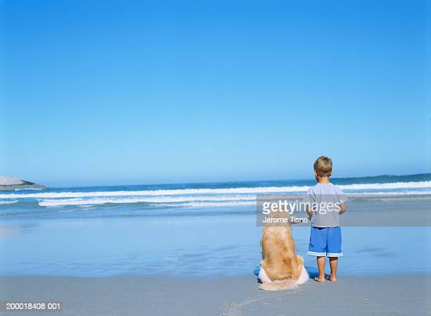 Boy (4-6) on beach with dog, rear view