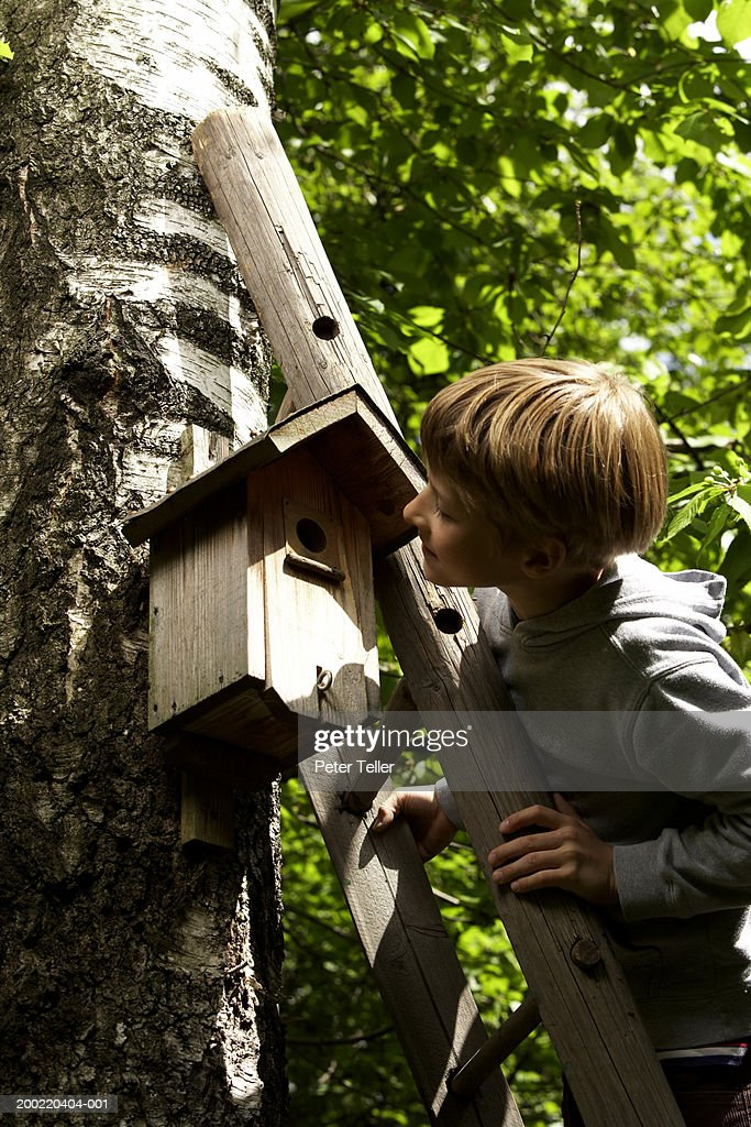 Tremendous Boy On Ladder Looking In Bird House Nailed To Tree Stock Download Free Architecture Designs Scobabritishbridgeorg