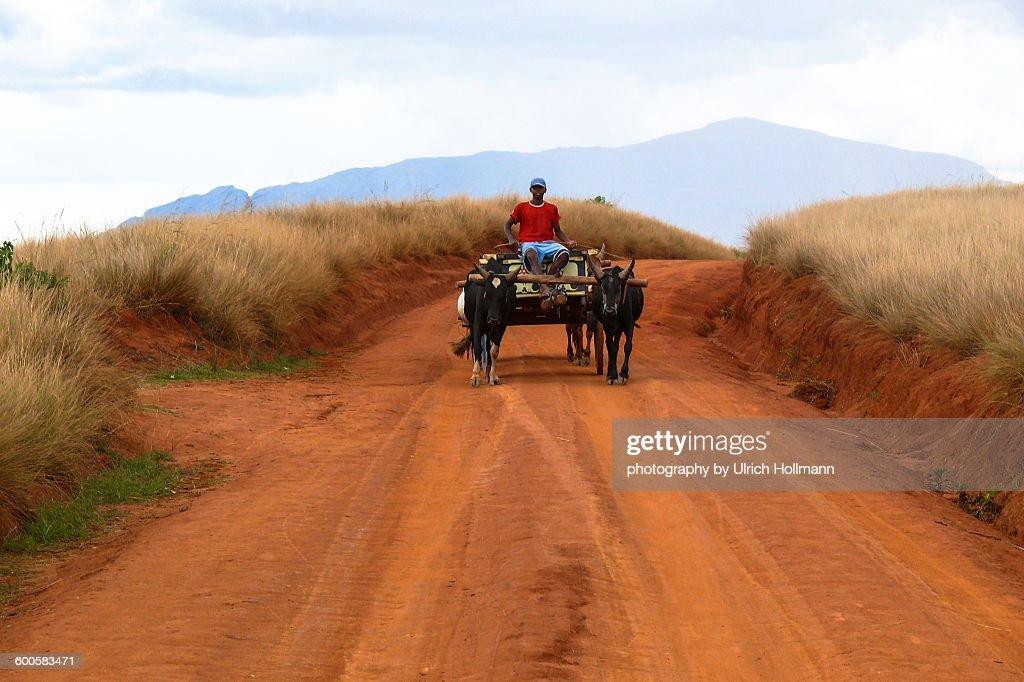 Boy on Ox Cart, Central Highlands, Madagaskar : Stock Photo