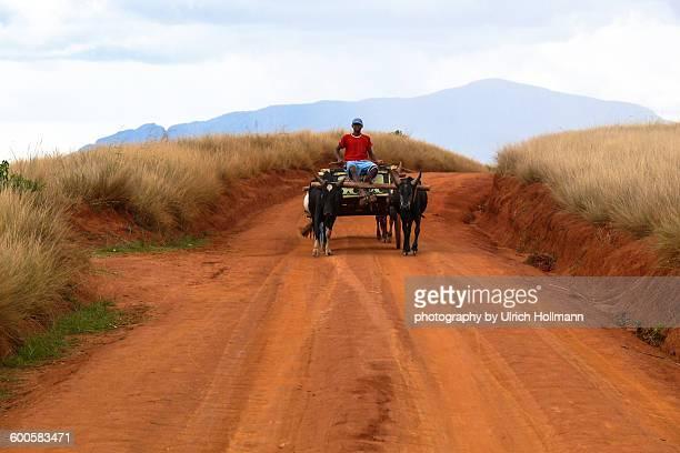 boy on ox cart, central highlands, madagaskar - ox cart stock-fotos und bilder