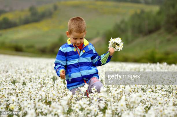 Boy on the field of white narcissus poeticus in spring