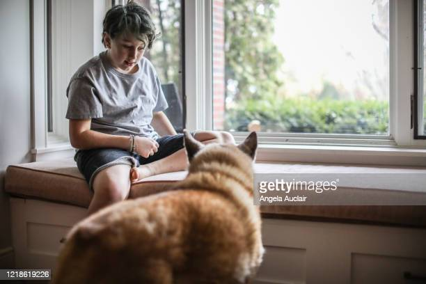 boy on window seat with dogs - angela auclair stock pictures, royalty-free photos & images
