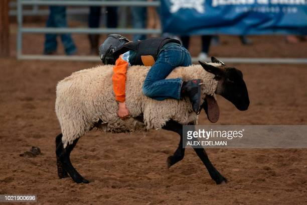 A boy participates in mutton bustin' as he rides a sheep at the Snowmass Rodeo on August 22 in Snowmass Colorado The Snowmass rodeo is on its 45th...